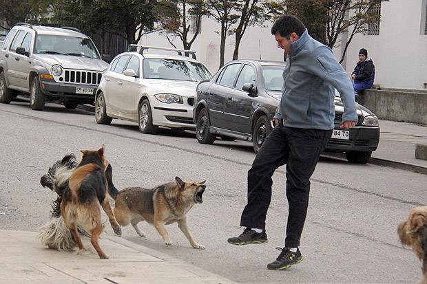 perro-atacar-persona