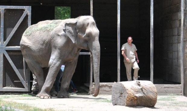elefanta-pelusa